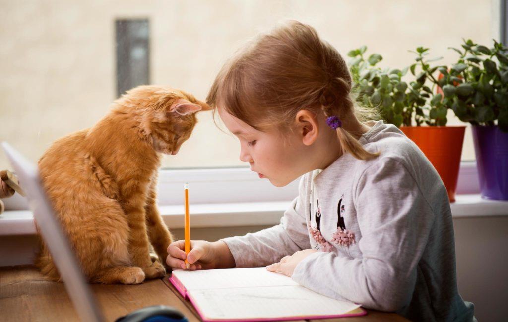 Как поддерживать ресурс ребенка, чтобы он хотел учиться